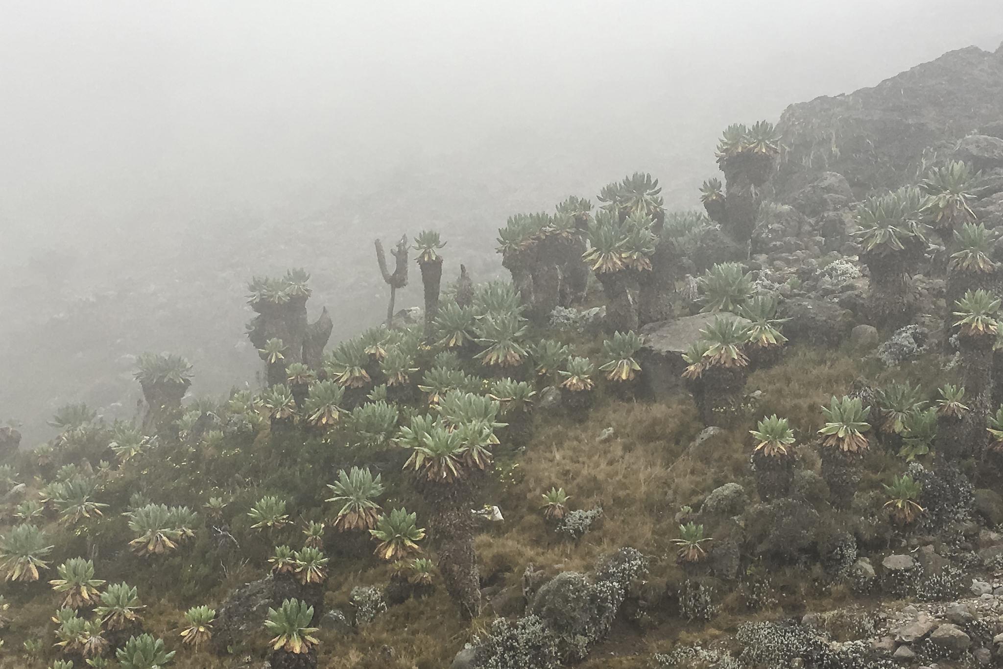 Kilimanjaro - 103