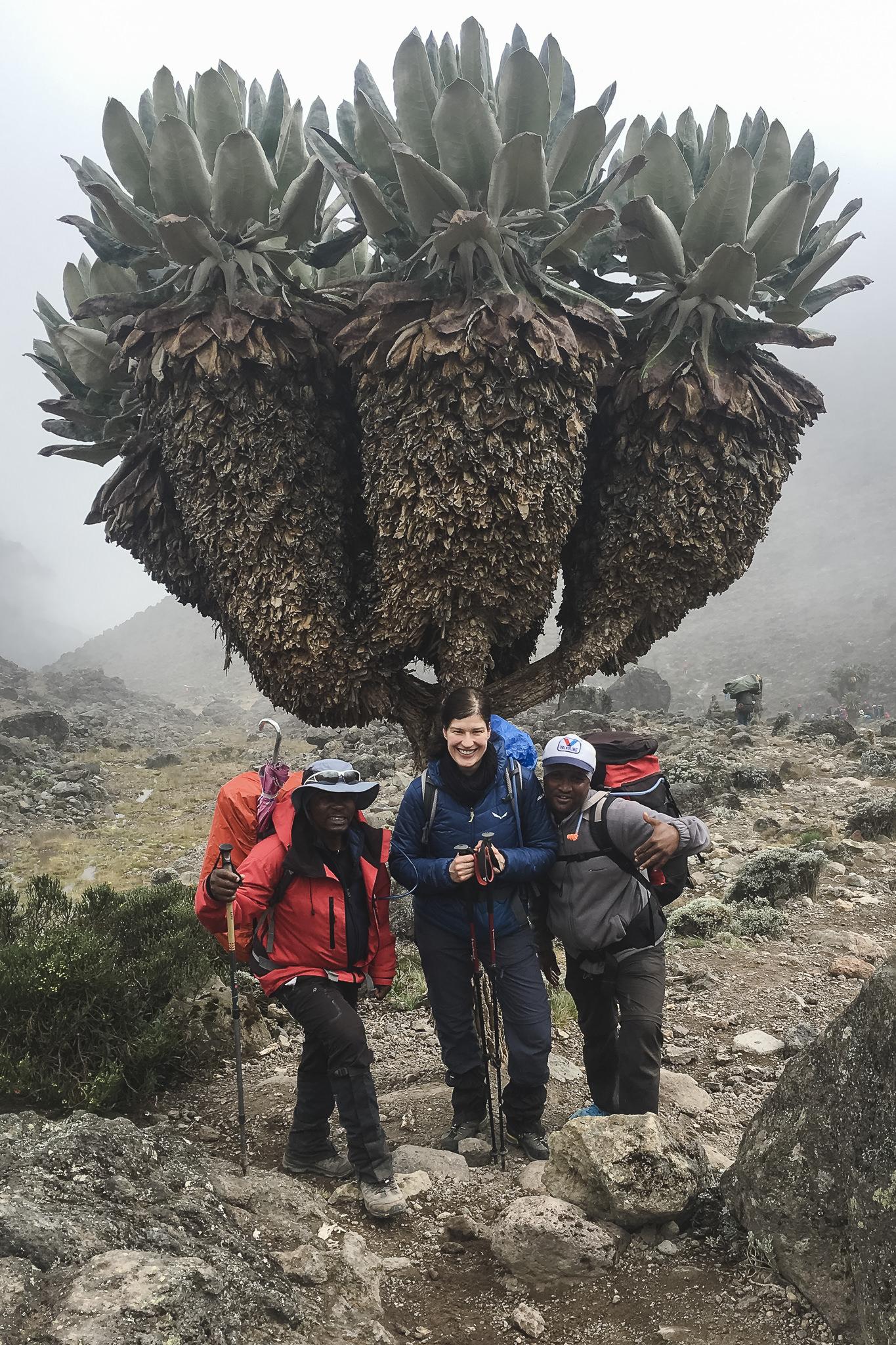 Kilimanjaro - 109