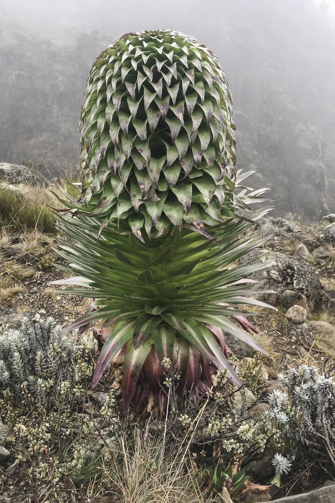 Kilimanjaro - 114