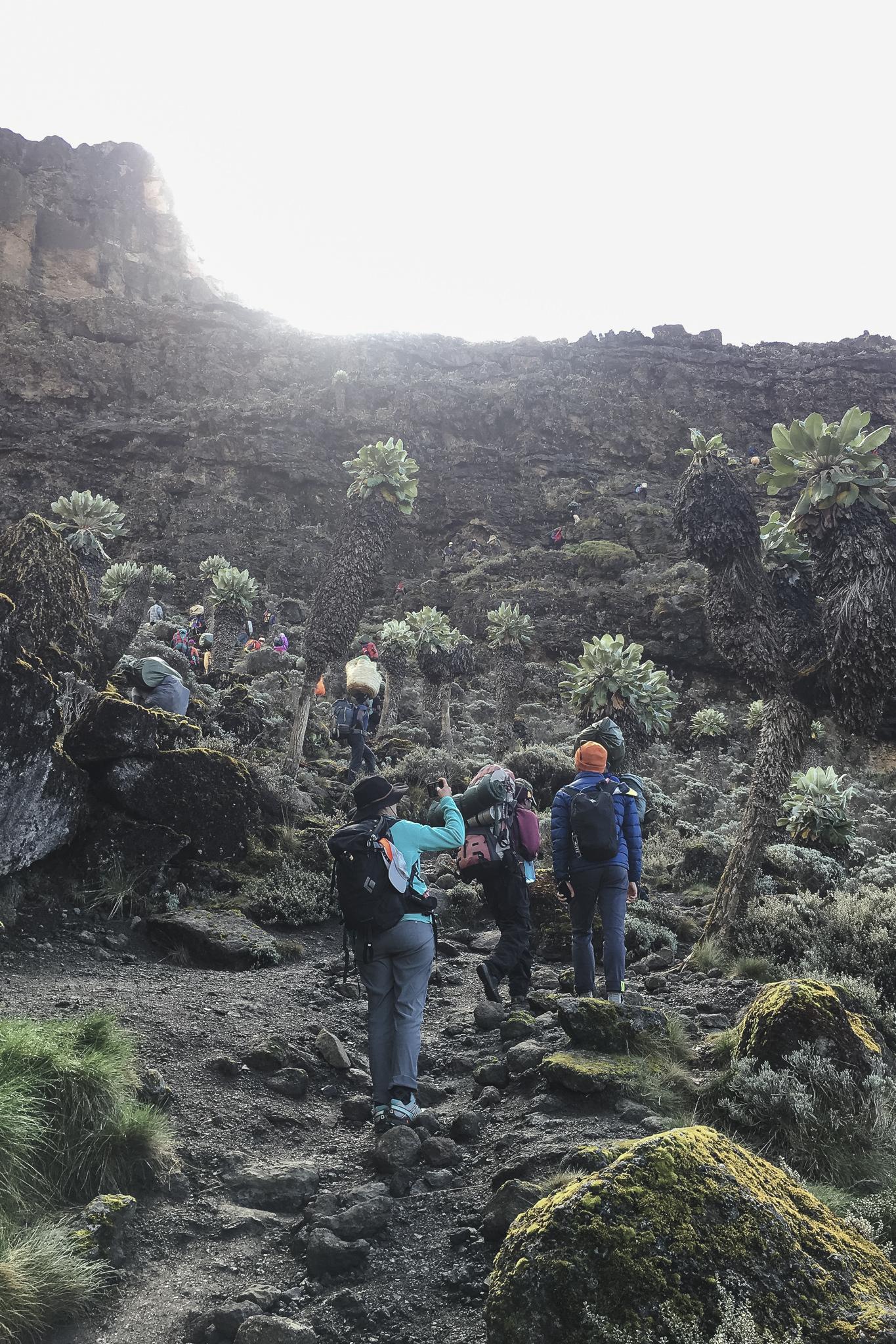 Kilimanjaro - 134