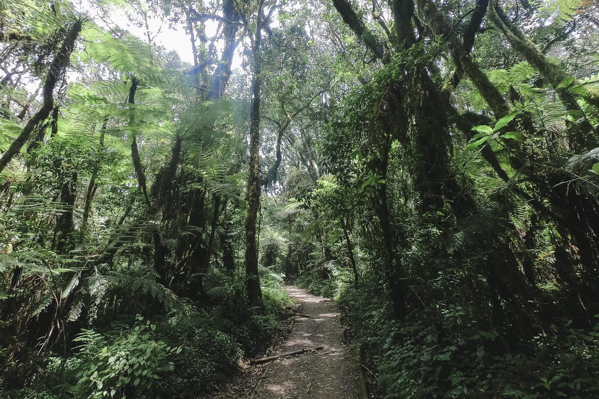 die erste Etappe der Kilimanjaro Besteigung führt durch den grünen Regenwald