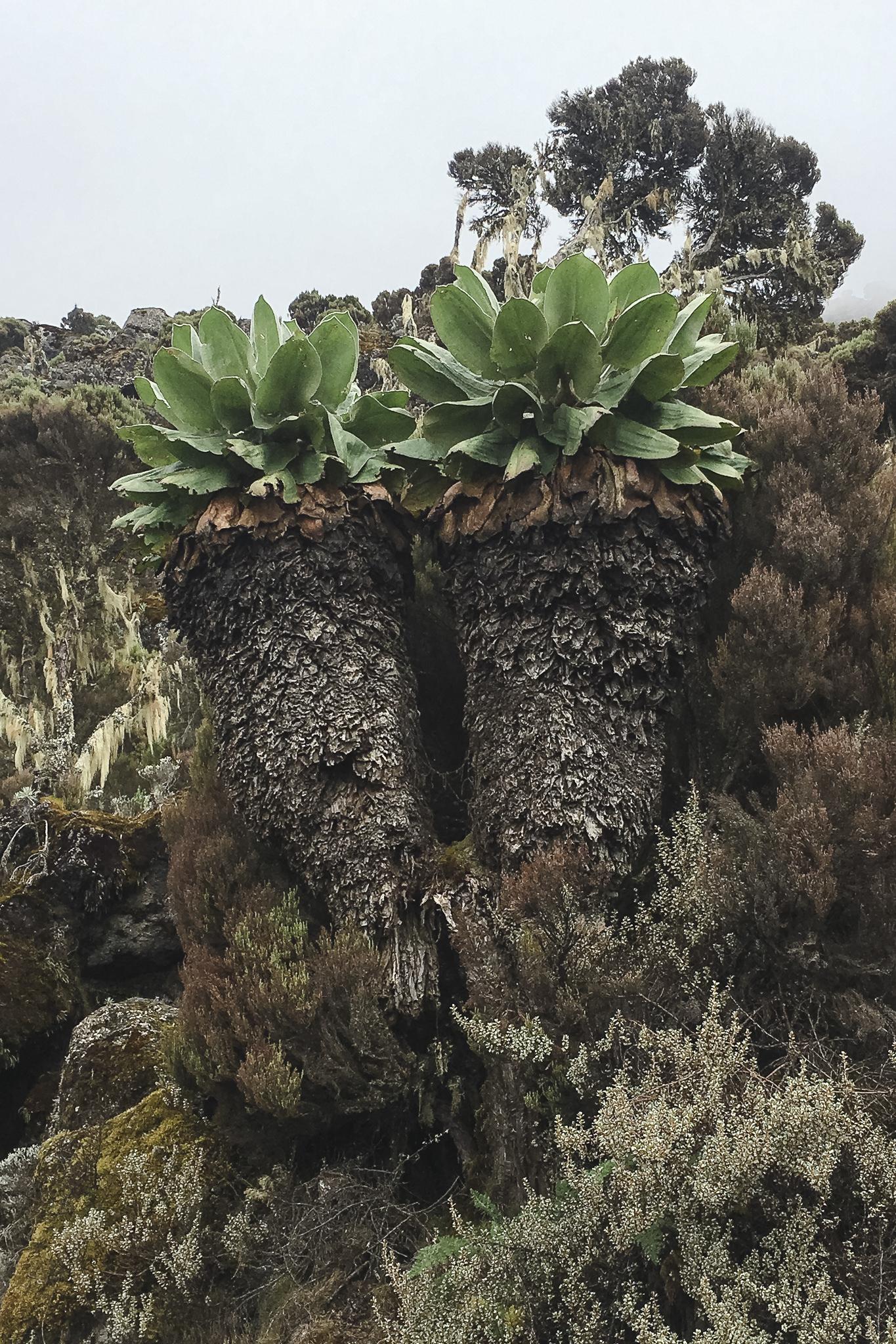 Kilimanjaro - 71