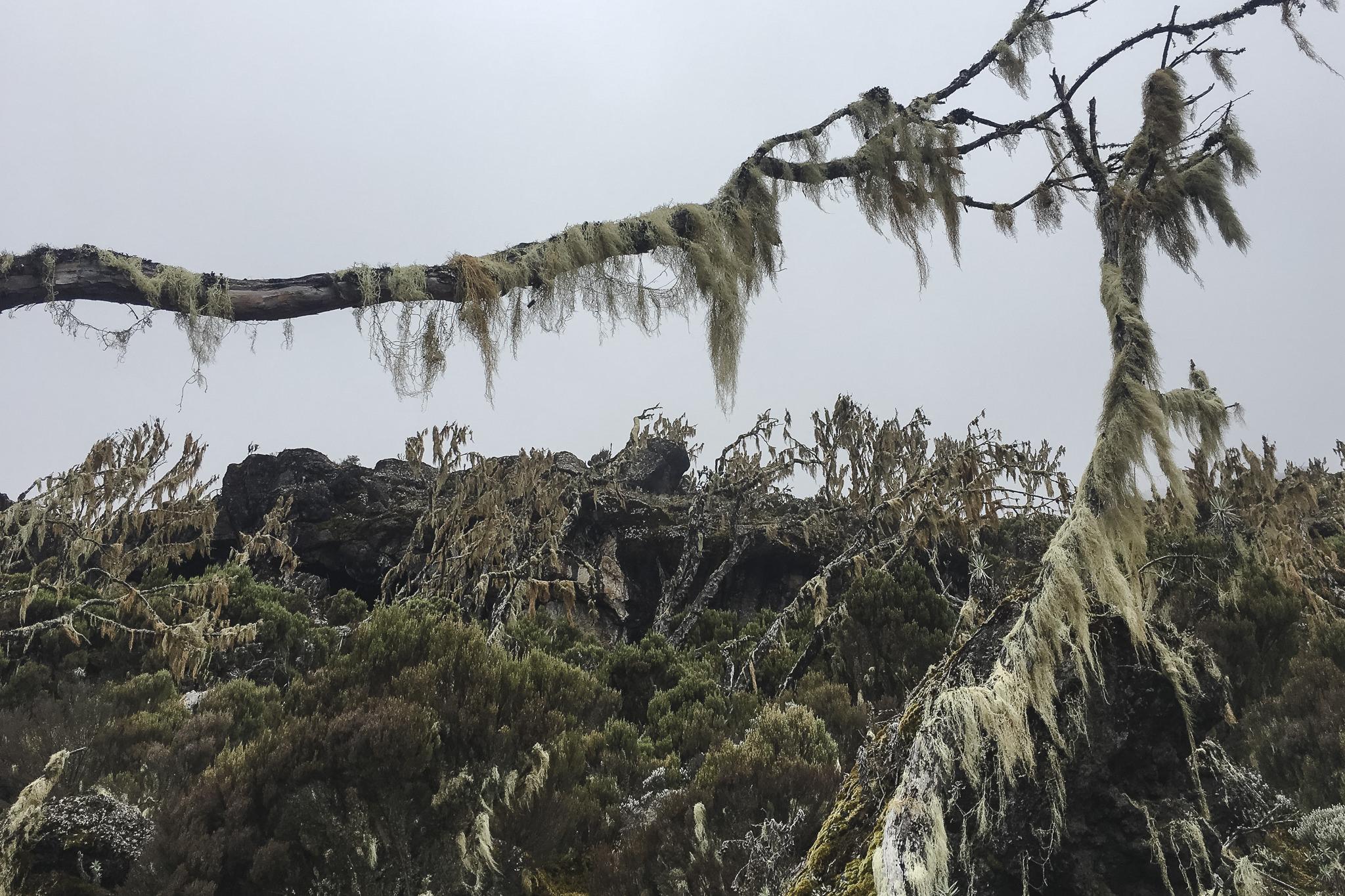 Kilimanjaro - 72
